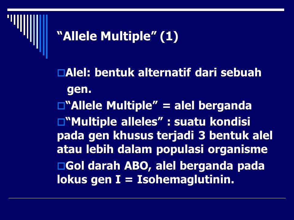 """Allele Multiple"" (1)  Alel: bentuk alternatif dari sebuah gen.  ""Allele Multiple"" = alel berganda  ""Multiple alleles"" : suatu kondisi pada gen khu"