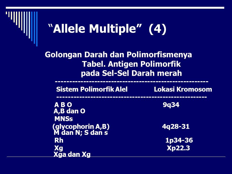 """""""Allele Multiple"""" (4) Golongan Darah dan Polimorfismenya Tabel. Antigen Polimorfik pada Sel-Sel Darah merah ------------------------------------------"""