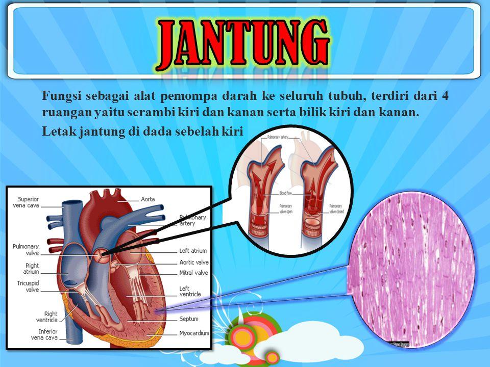 Sistem Peredaran Darah OrganJantung Pembuluh Darah Arteri VenaSel Darah Eritrosit Leukosit Trombosit Plasma Darah