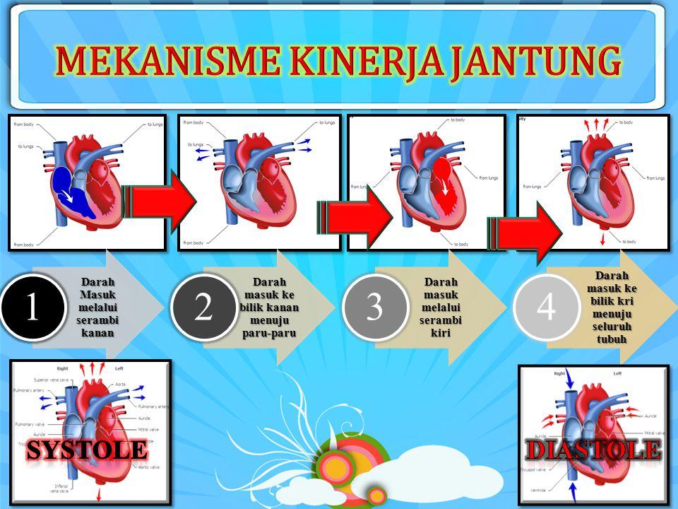 Fungsi sebagai alat pemompa darah ke seluruh tubuh, terdiri dari 4 ruangan yaitu serambi kiri dan kanan serta bilik kiri dan kanan. Letak jantung di d