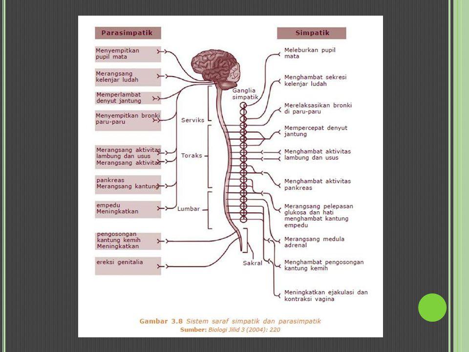 O BAT KOLINERGIK (P ARASIMPATOMIMETIK ) Efeknya mirip dengan perangsangan aktifitas susunan saraf parasimpatis Reseptor kolinergik: Muskarinik: merangsang otot polos dan memperlambat denyut jantung Nikotinik/ neuromuskular → mempengaruhi otot rangka Penggolongan Kolinergik Ester kolin (asetil kolin, metakolin, karbakol, betanekol) Anti kolinestrase (eserin, prostigmin, dilsopropil fluorofosfat) Alkaloid tumbuhan (muskarin, pilokarpin, arekolin) Obat kolinergik lain (metoklopramid, sisaprid)