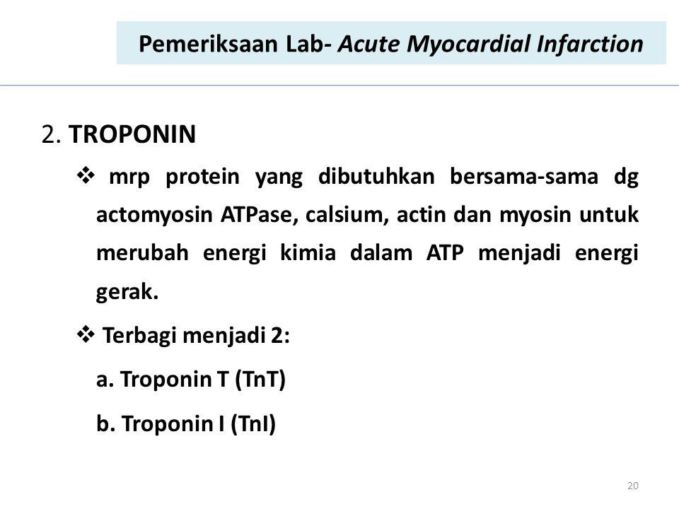 2. TROPONIN  mrp protein yang dibutuhkan bersama-sama dg actomyosin ATPase, calsium, actin dan myosin untuk merubah energi kimia dalam ATP menjadi en