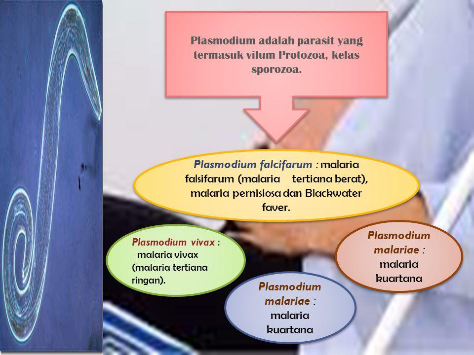 Plasmodium adalah parasit yang termasuk vilum Protozoa, kelas sporozoa. Plasmodium vivax : malaria vivax (malaria tertiana ringan). Plasmodium vivax :