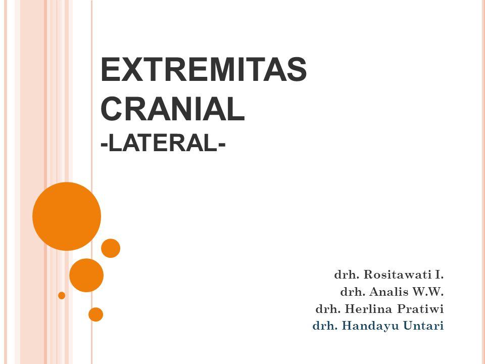 EXTREMITAS CRANIAL -LATERAL- drh. Rositawati I. drh. Analis W.W. drh. Herlina Pratiwi drh. Handayu Untari