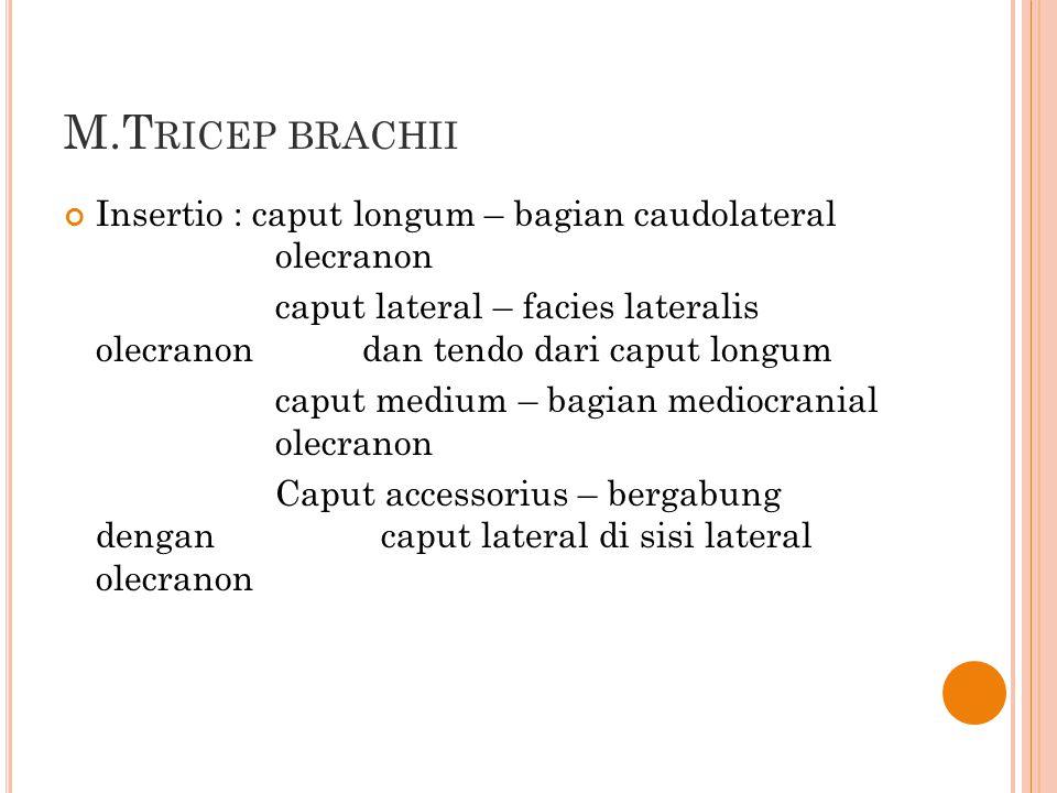 M.T RICEP BRACHII Insertio : caput longum – bagian caudolateral olecranon caput lateral – facies lateralis olecranon dan tendo dari caput longum caput