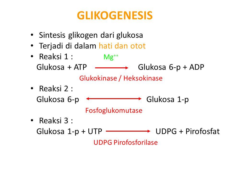GLIKOGENESIS Sintesis glikogen dari glukosa Terjadi di dalam hati dan otot Reaksi 1 : Mg ++ Glukosa + ATP Glukosa 6-p + ADP Glukokinase / Heksokinase Reaksi 2 : Glukosa 6-p Glukosa 1-p Fosfoglukomutase Reaksi 3 : Glukosa 1-p + UTP UDPG + Pirofosfat UDPG Pirofosforilase