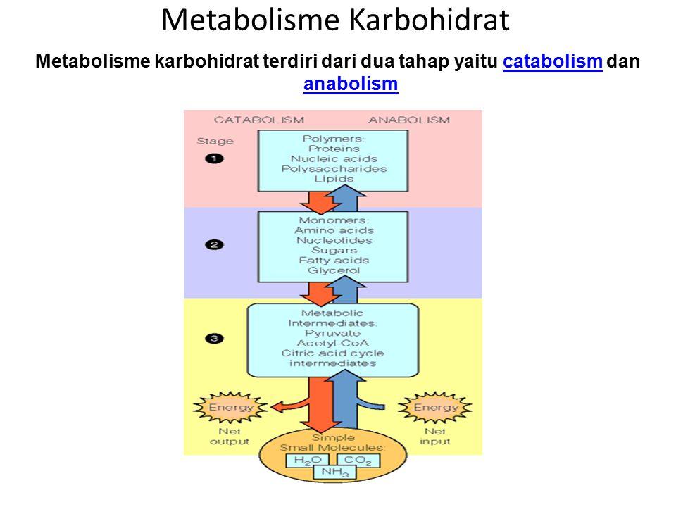 Glukosa darah memacu jalur metabolisme karbohidrat berikut : 1.