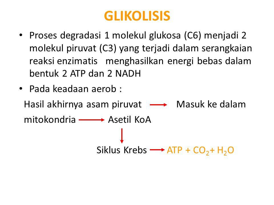 GLIKOLISIS Proses degradasi 1 molekul glukosa (C6) menjadi 2 molekul piruvat (C3) yang terjadi dalam serangkaian reaksi enzimatis menghasilkan energi bebas dalam bentuk 2 ATP dan 2 NADH Pada keadaan aerob : Hasil akhirnya asam piruvat Masuk ke dalam mitokondria Asetil KoA Siklus Krebs ATP + CO 2 + H 2 O