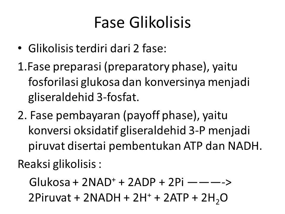 Fase Glikolisis Glikolisis terdiri dari 2 fase: 1.Fase preparasi (preparatory phase), yaitu fosforilasi glukosa dan konversinya menjadi gliseraldehid 3-fosfat.