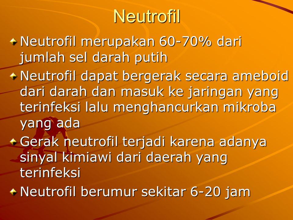 Neutrofil Neutrofil merupakan 60-70% dari jumlah sel darah putih Neutrofil dapat bergerak secara ameboid dari darah dan masuk ke jaringan yang terinfe