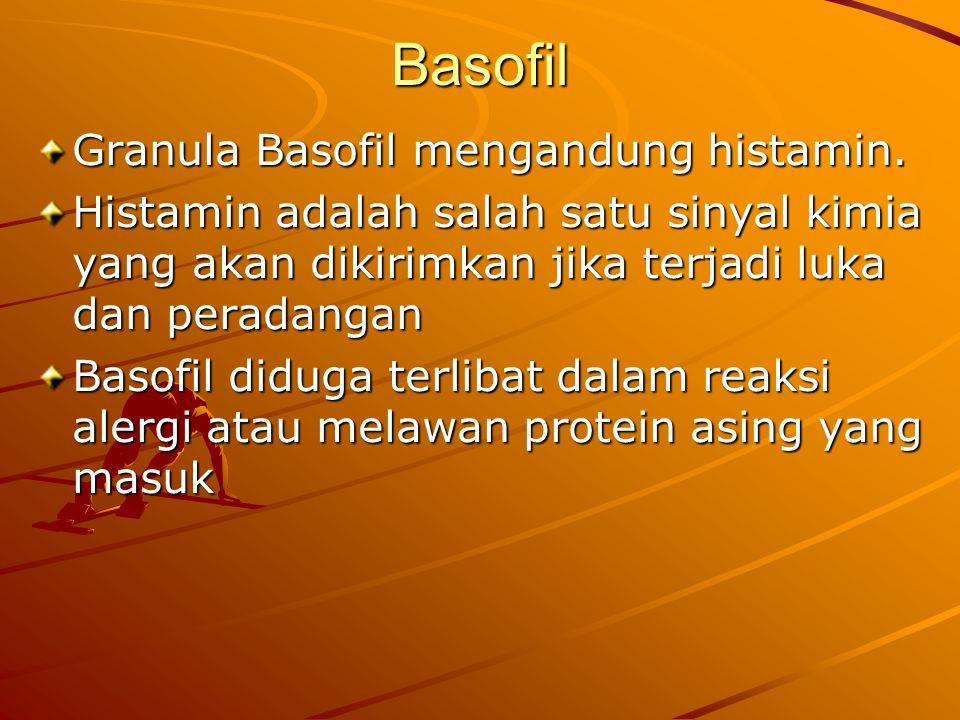 Basofil Granula Basofil mengandung histamin. Histamin adalah salah satu sinyal kimia yang akan dikirimkan jika terjadi luka dan peradangan Basofil did
