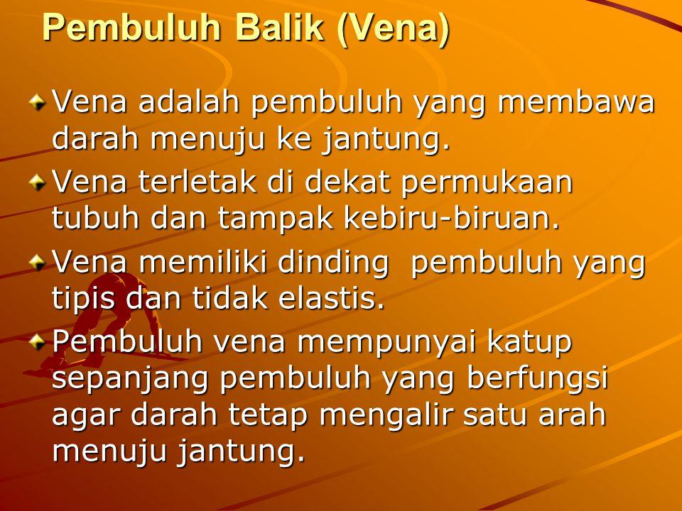 Pembuluh Balik (Vena) Vena adalah pembuluh yang membawa darah menuju ke jantung. Vena terletak di dekat permukaan tubuh dan tampak kebiru-biruan. Vena