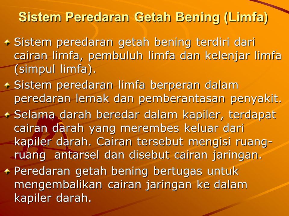Sistem Peredaran Getah Bening (Limfa) Sistem peredaran getah bening terdiri dari cairan limfa, pembuluh limfa dan kelenjar limfa (simpul limfa). Siste