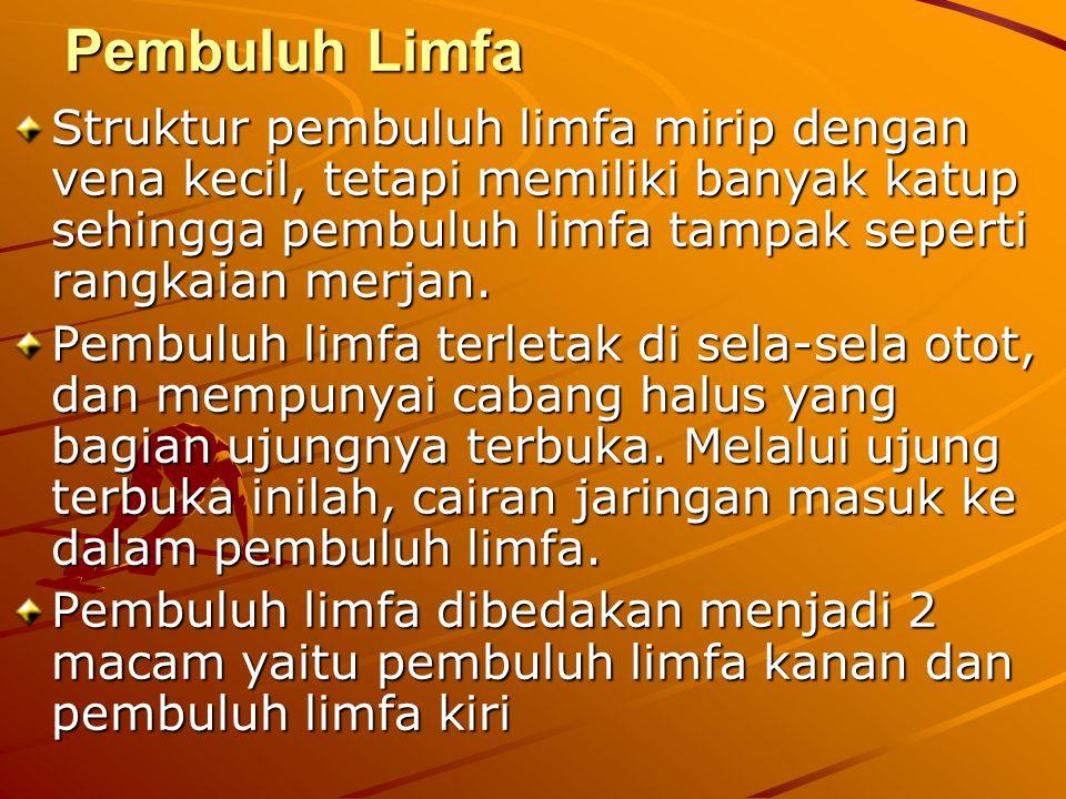 Pembuluh Limfa Struktur pembuluh limfa mirip dengan vena kecil, tetapi memiliki banyak katup sehingga pembuluh limfa tampak seperti rangkaian merjan.