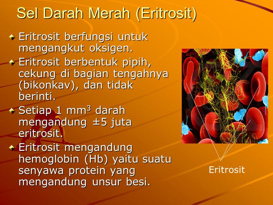 Sel Darah Merah (Eritrosit) Eritrosit berfungsi untuk mengangkut oksigen. Eritrosit berbentuk pipih, cekung di bagian tengahnya (bikonkav), dan tidak