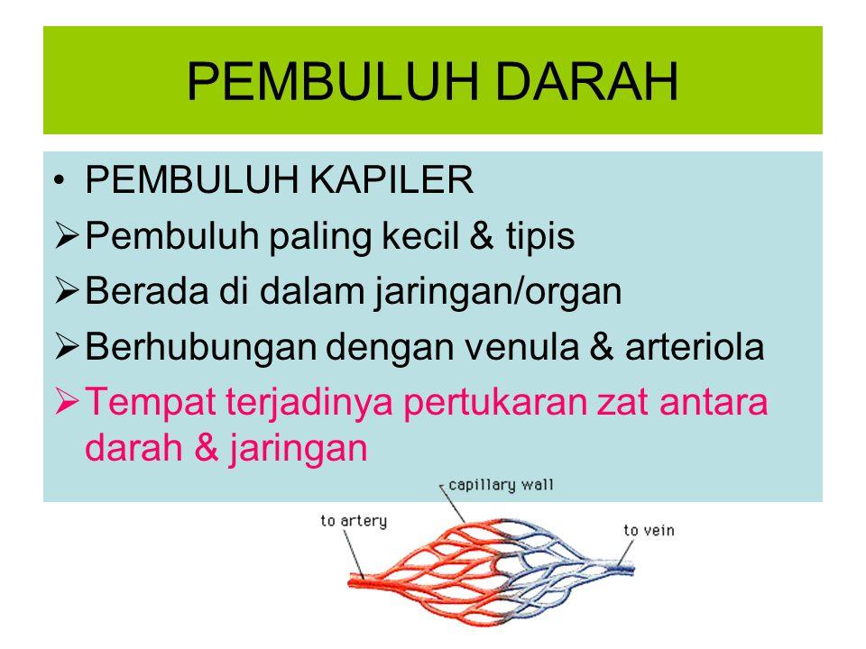 PEMBULUH DARAH PEMBULUH KAPILER  Pembuluh paling kecil & tipis  Berada di dalam jaringan/organ  Berhubungan dengan venula & arteriola  Tempat terj