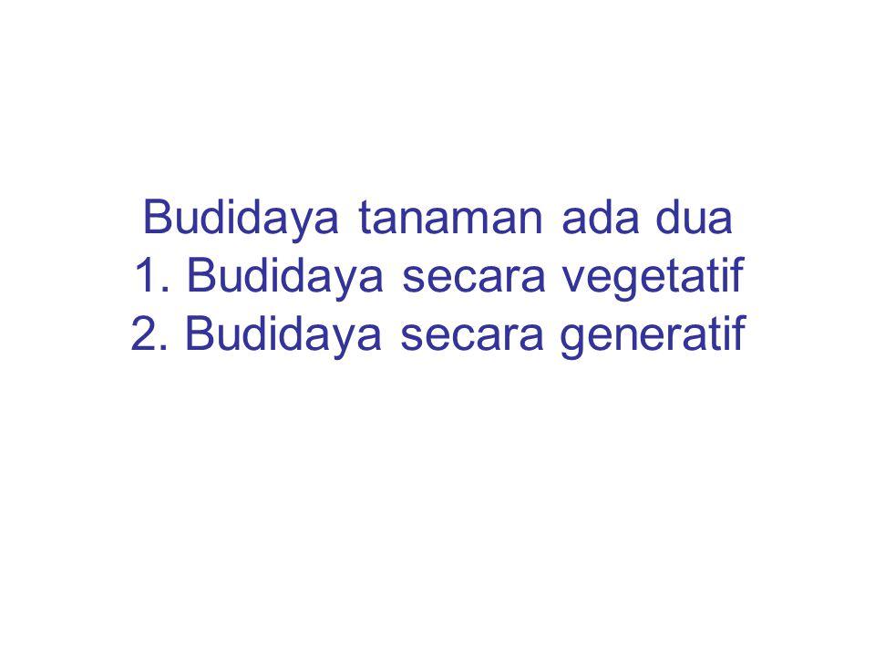Budidaya tanaman ada dua 1. Budidaya secara vegetatif 2. Budidaya secara generatif