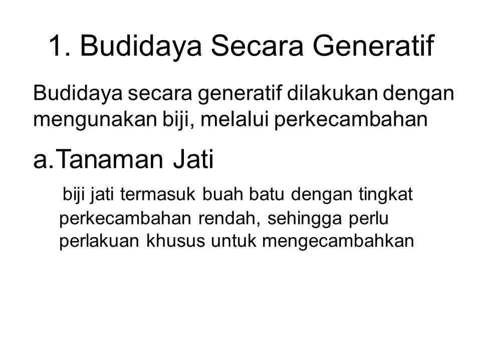 1. Budidaya Secara Generatif Budidaya secara generatif dilakukan dengan mengunakan biji, melalui perkecambahan a.Tanaman Jati biji jati termasuk buah