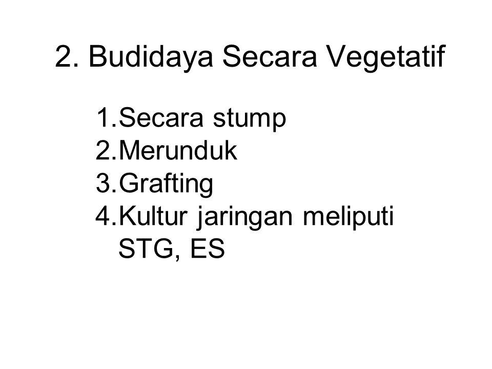2. Budidaya Secara Vegetatif 1.Secara stump 2.Merunduk 3.Grafting 4.Kultur jaringan meliputi STG, ES
