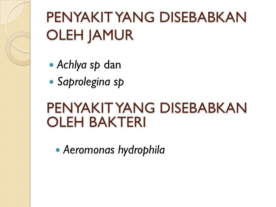 PENYAKIT YANG DISEBABKAN OLEH JAMUR Achlya sp dan Saprolegina sp PENYAKIT YANG DISEBABKAN OLEH BAKTERI Aeromonas hydrophila
