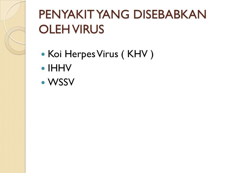 PENYAKIT YANG DISEBABKAN OLEH VIRUS Koi Herpes Virus ( KHV ) IHHV WSSV
