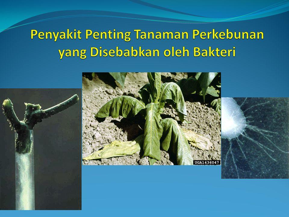 Pengendalian Nematoda pada Tanaman Lada 1.Teknik Budidaya - Sanitasi (menjaga kebersihan kebun) - Membongkar tanaman sakit - Tidak menanam tanaman inang R.