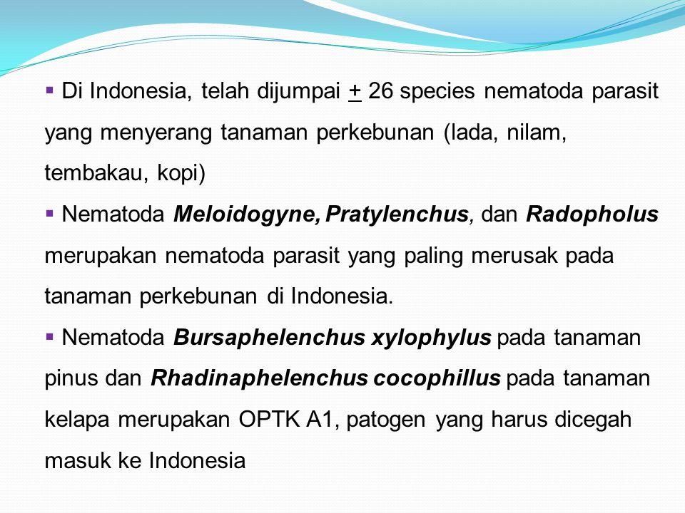  Di Indonesia, telah dijumpai + 26 species nematoda parasit yang menyerang tanaman perkebunan (lada, nilam, tembakau, kopi)  Nematoda Meloidogyne, P