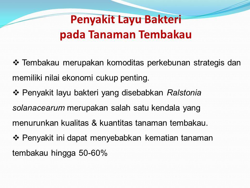 Penyakit Layu Bakteri pada Tanaman Tembakau  Tembakau merupakan komoditas perkebunan strategis dan memiliki nilai ekonomi cukup penting.  Penyakit l