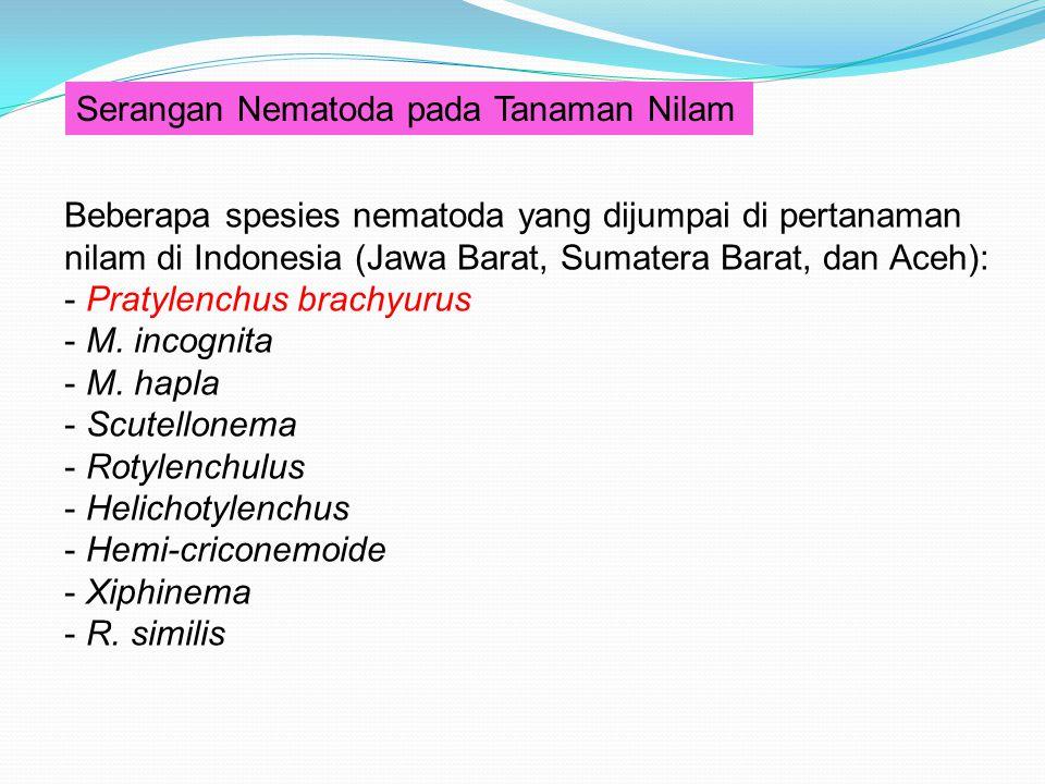 Serangan Nematoda pada Tanaman Nilam Beberapa spesies nematoda yang dijumpai di pertanaman nilam di Indonesia (Jawa Barat, Sumatera Barat, dan Aceh):