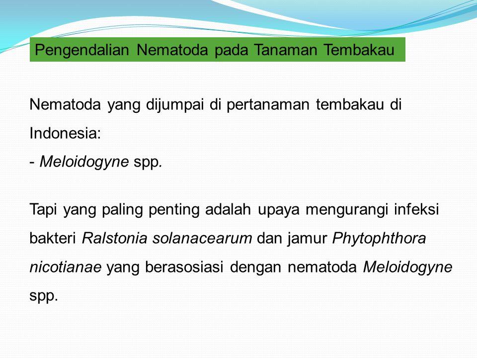 Pengendalian Nematoda pada Tanaman Tembakau Nematoda yang dijumpai di pertanaman tembakau di Indonesia: - Meloidogyne spp. Tapi yang paling penting ad