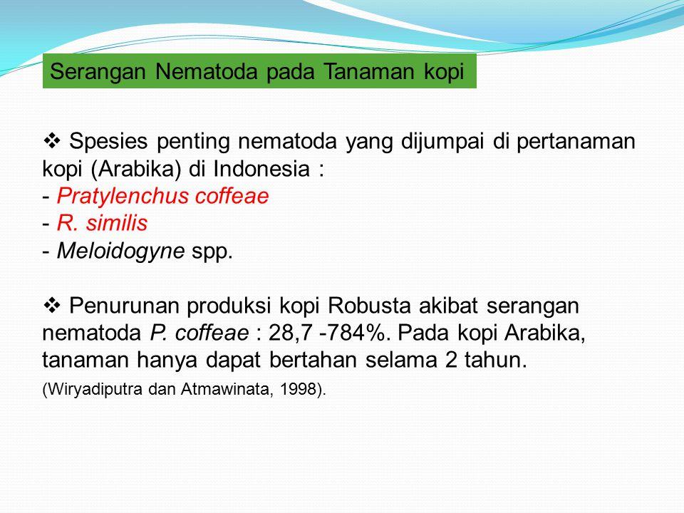Serangan Nematoda pada Tanaman kopi  Spesies penting nematoda yang dijumpai di pertanaman kopi (Arabika) di Indonesia : - Pratylenchus coffeae - R. s