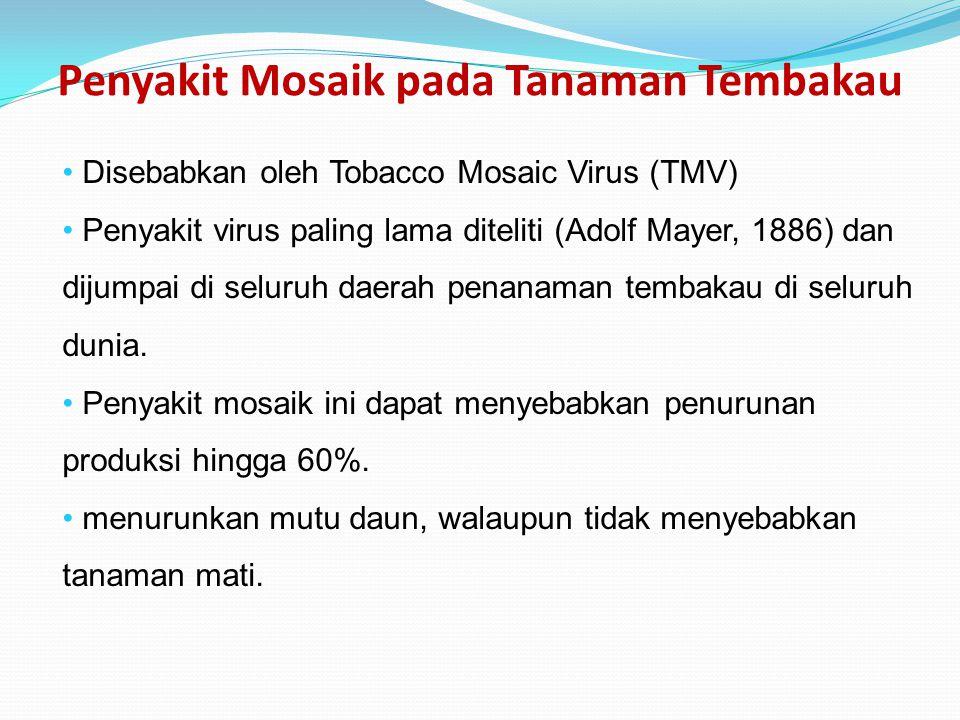 Penyakit Mosaik pada Tanaman Tembakau Disebabkan oleh Tobacco Mosaic Virus (TMV) Penyakit virus paling lama diteliti (Adolf Mayer, 1886) dan dijumpai