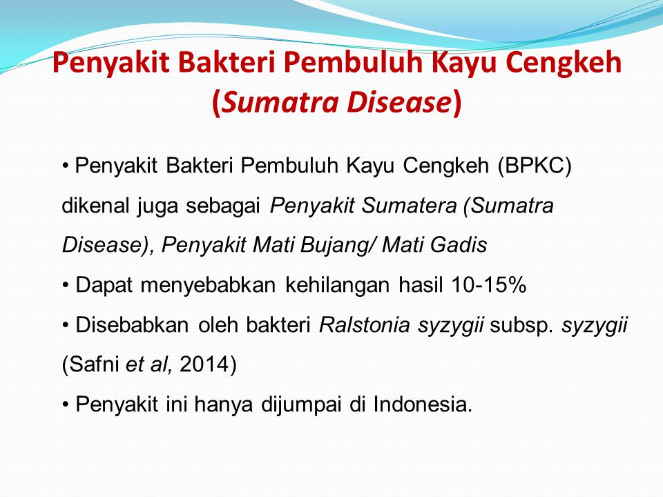 Penyakit Bakteri Pembuluh Kayu Cengkeh (Sumatra Disease) Penyakit Bakteri Pembuluh Kayu Cengkeh (BPKC) dikenal juga sebagai Penyakit Sumatera (Sumatra