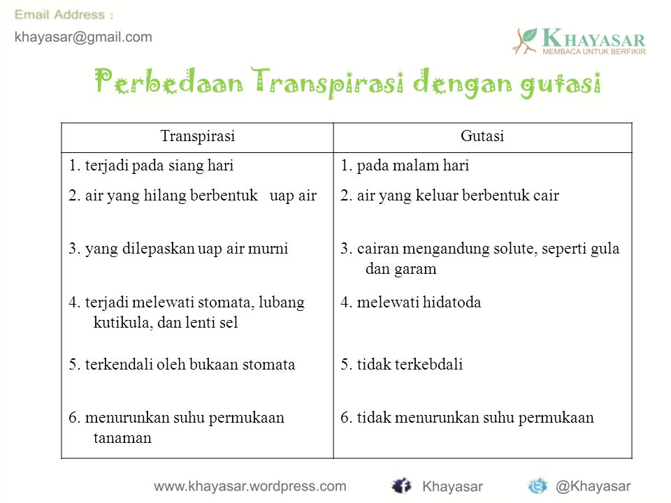 Perbedaan Transpirasi dengan gutasi TranspirasiGutasi 1.