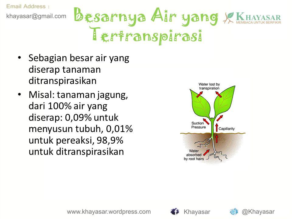 Besarnya Air yang Tertranspirasi Sebagian besar air yang diserap tanaman ditranspirasikan Misal: tanaman jagung, dari 100% air yang diserap: 0,09% untuk menyusun tubuh, 0,01% untuk pereaksi, 98,9% untuk ditranspirasikan