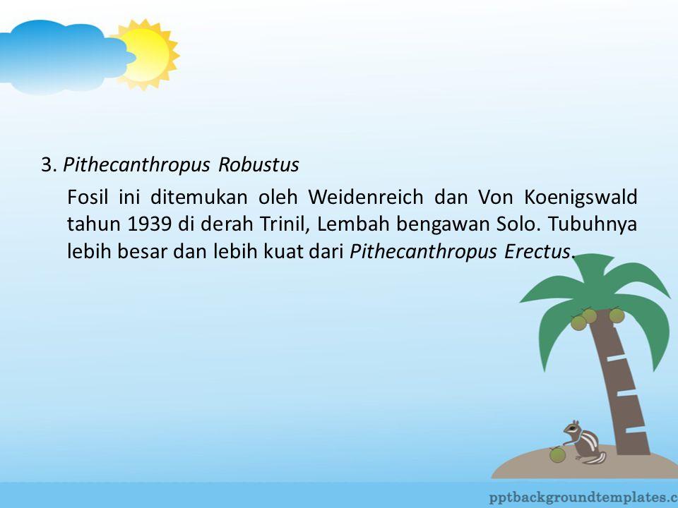 3. Pithecanthropus Robustus Fosil ini ditemukan oleh Weidenreich dan Von Koenigswald tahun 1939 di derah Trinil, Lembah bengawan Solo. Tubuhnya lebih