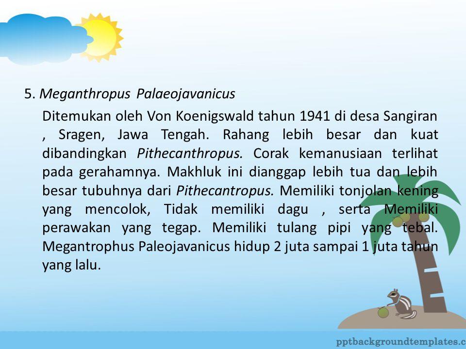 5. Meganthropus Palaeojavanicus Ditemukan oleh Von Koenigswald tahun 1941 di desa Sangiran, Sragen, Jawa Tengah. Rahang lebih besar dan kuat dibanding