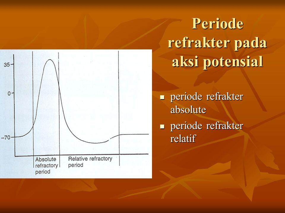 Periode refrakter pada aksi potensial periode refrakter absolute periode refrakter absolute periode refrakter relatif periode refrakter relatif