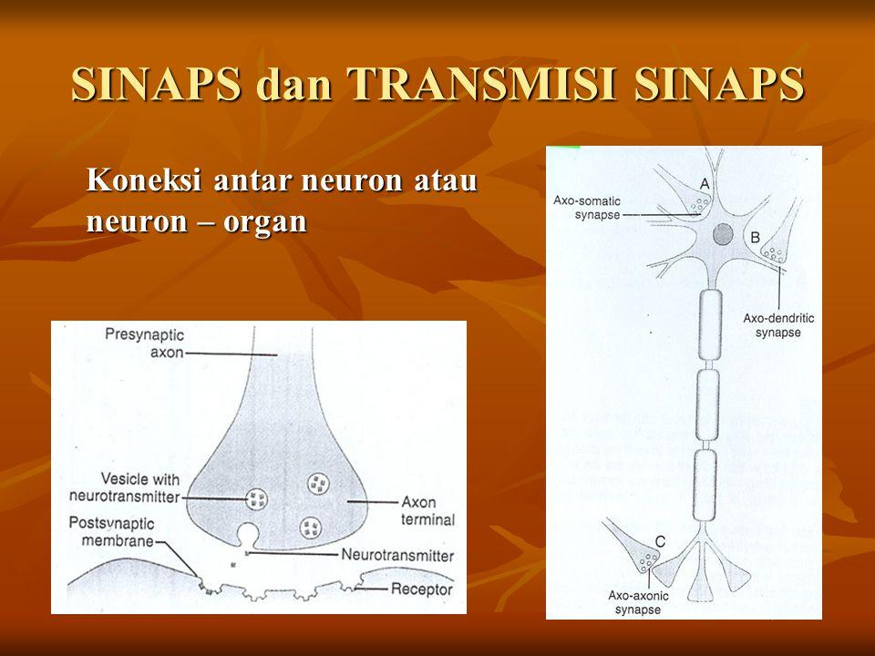 SINAPS dan TRANSMISI SINAPS Koneksi antar neuron atau neuron – organ