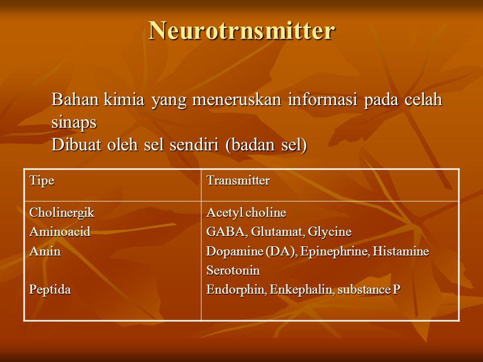 Neurotrnsmitter Bahan kimia yang meneruskan informasi pada celah sinaps Dibuat oleh sel sendiri (badan sel) TipeTransmitter CholinergikAminoacidAmin P