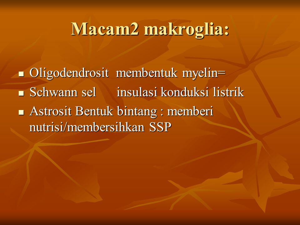 Macam2 makroglia: Oligodendrosit membentuk myelin= Oligodendrosit membentuk myelin= Schwann sel insulasi konduksi listrik Schwann sel insulasi konduks
