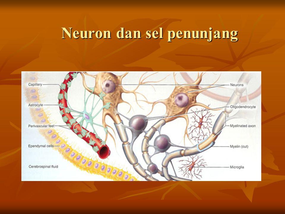 Neuron dan sel penunjang