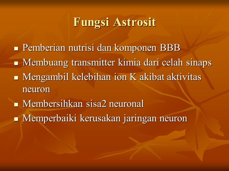 Fungsi Astrosit Pemberian nutrisi dan komponen BBB Pemberian nutrisi dan komponen BBB Membuang transmitter kimia dari celah sinaps Membuang transmitte