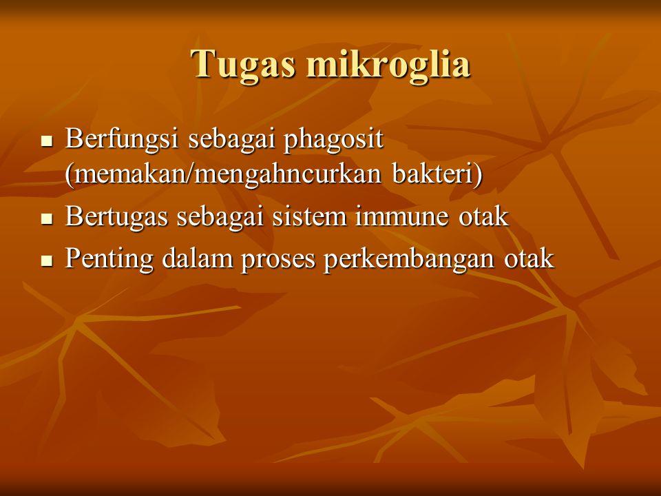 Tugas mikroglia Berfungsi sebagai phagosit (memakan/mengahncurkan bakteri) Berfungsi sebagai phagosit (memakan/mengahncurkan bakteri) Bertugas sebagai