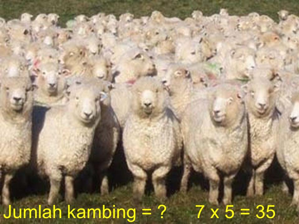 Jumlah kambing = 7 x 5 = 35