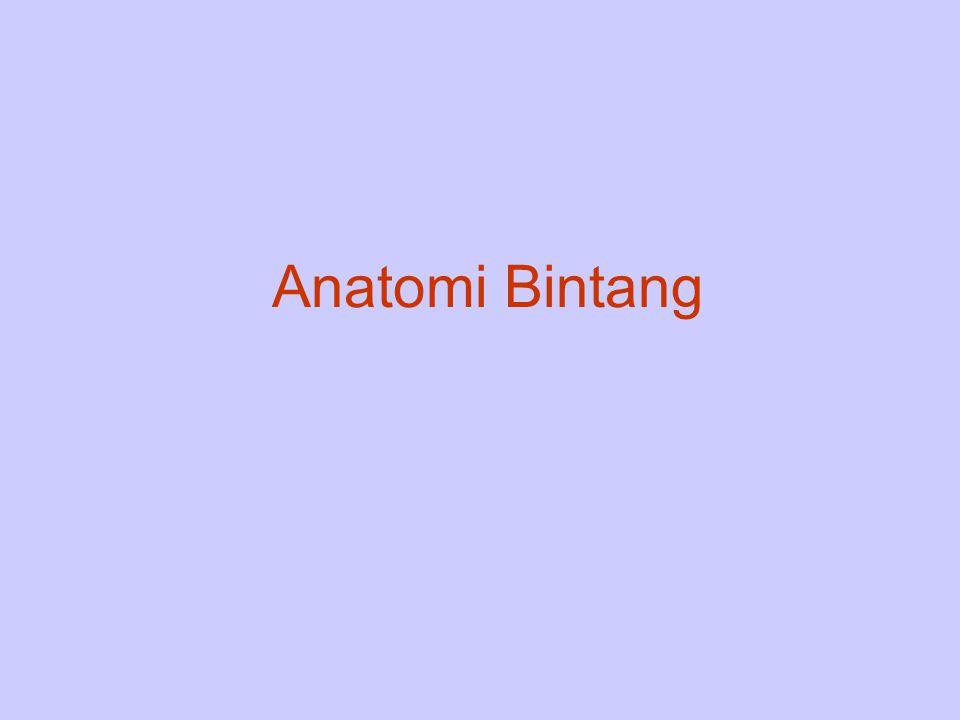 Anatomi Bintang