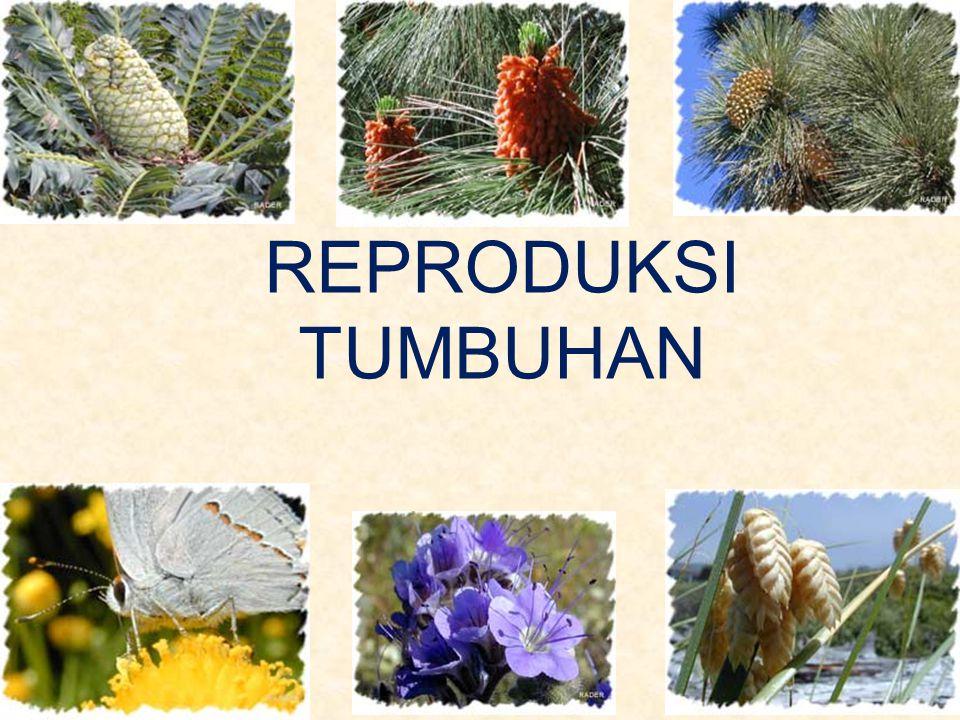 Bunga Bunga terdiri atas alat reproduksi dan jaringan steril Bagian steril: sepals dan petals.