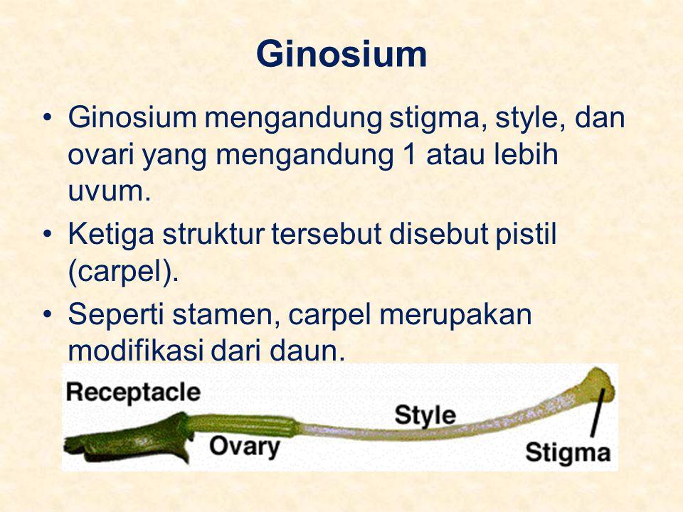 Ginosium Ginosium mengandung stigma, style, dan ovari yang mengandung 1 atau lebih uvum. Ketiga struktur tersebut disebut pistil (carpel). Seperti sta