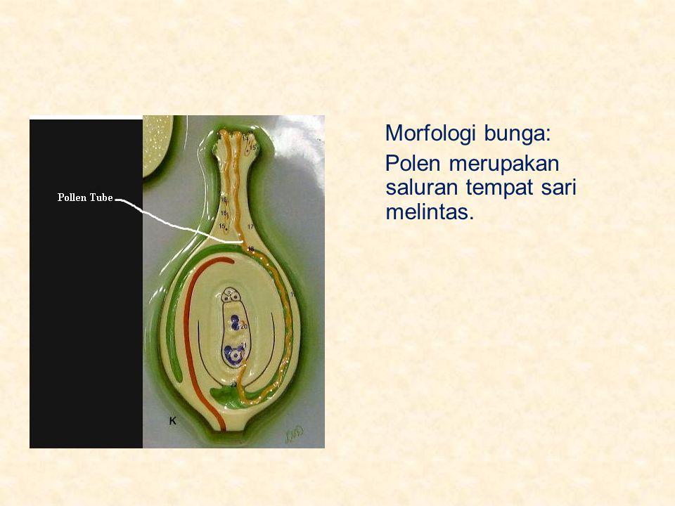 Morfologi bunga: Polen merupakan saluran tempat sari melintas.