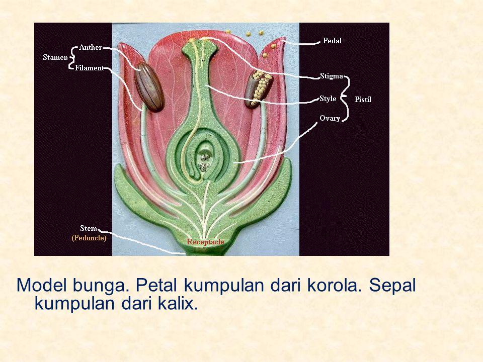 Bagian luar pollen disebut exine, yang mengandung kompleks polisakarida, sporopollenin.